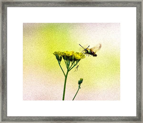 Moth And The Spider Framed Print