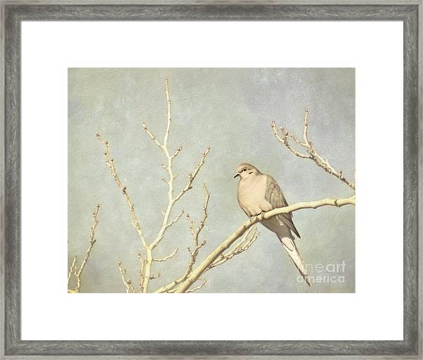 Mourning Dove In Winter Framed Print