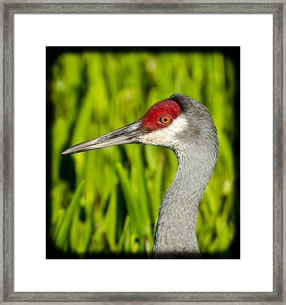 Mr Crane Framed Print