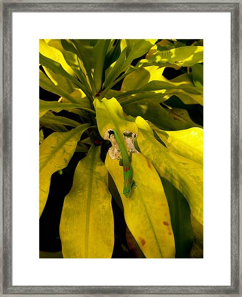Mr Gecko Framed Print
