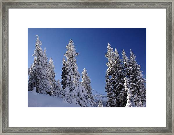 Mt. Rainier's Christmas Tree's Framed Print