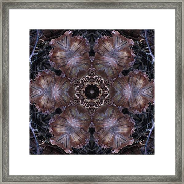 Mushroom With Brown Center Framed Print