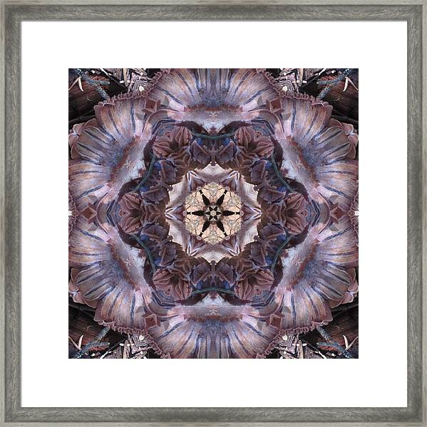 Mushroom With Star Center Framed Print