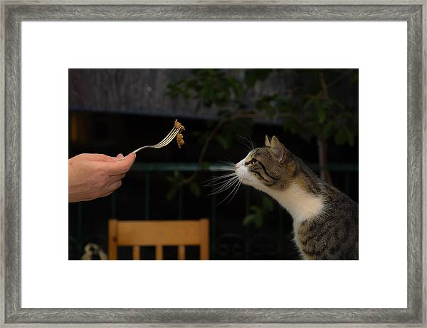 My Best Most Beloved Cat Framed Print