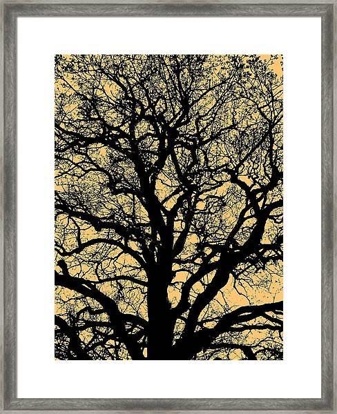 My Friend - The Tree ... Framed Print