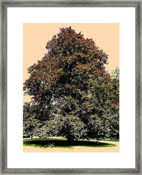 My Friend The Tree Framed Print