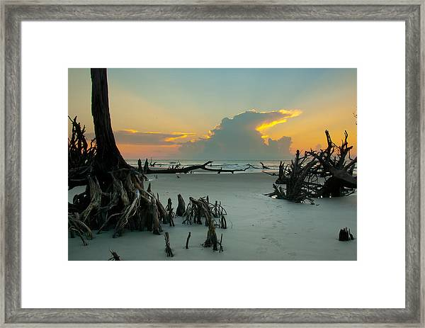 Framed Print featuring the photograph Mystical Forest by Francis Trudeau