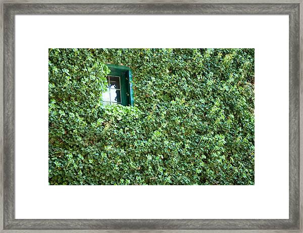 Napa Wine Cellar Window Framed Print