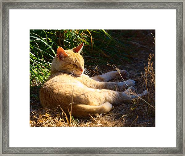 Napping Orange Cat Framed Print