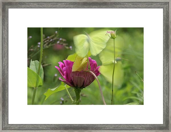 Nature's Beauty Framed Print