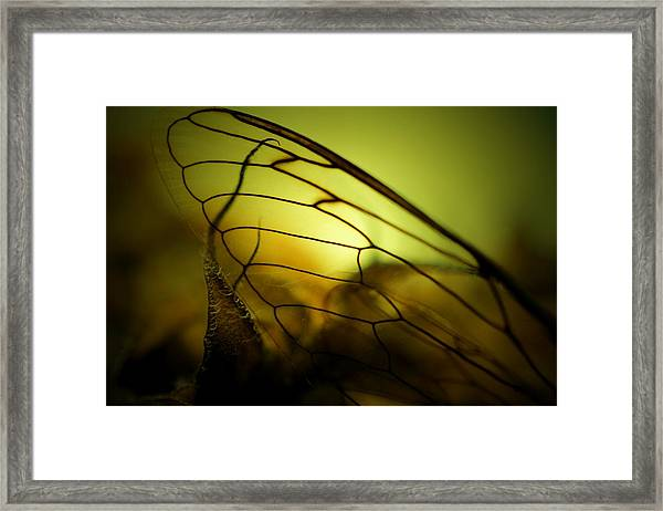 Nature's Stained Glass Framed Print