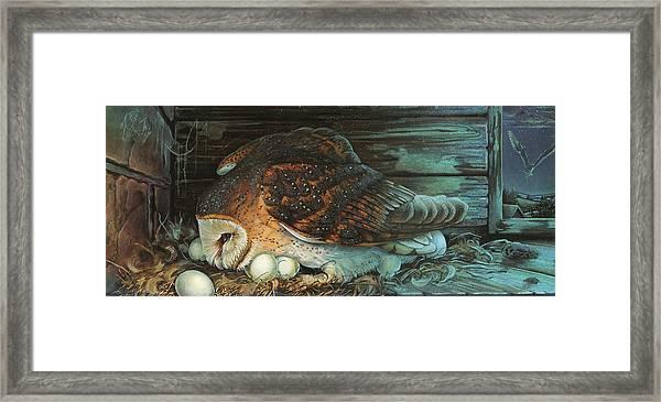 Nesting Owl Framed Print