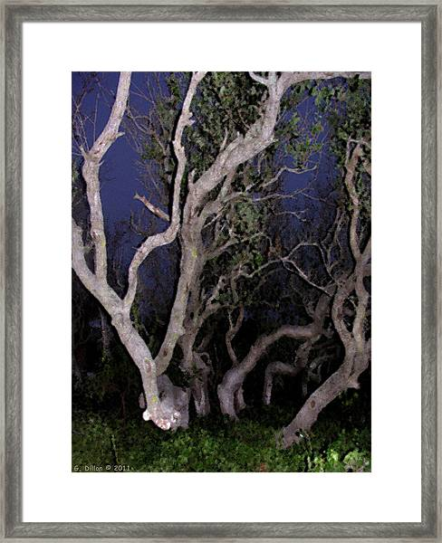 Night Branches Framed Print