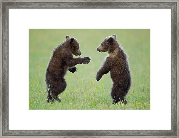 Ninja Cubs 2 Framed Print