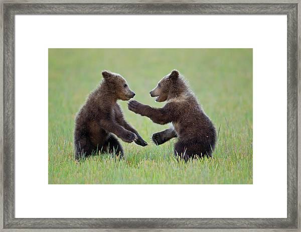 Ninja Cubs Framed Print