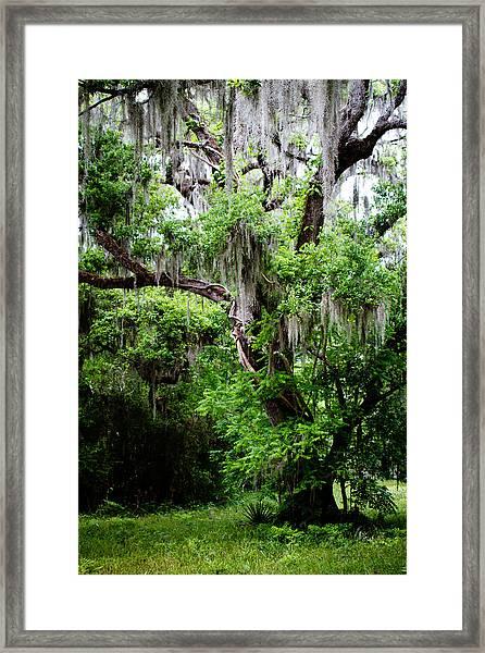 Oak And Moss Framed Print
