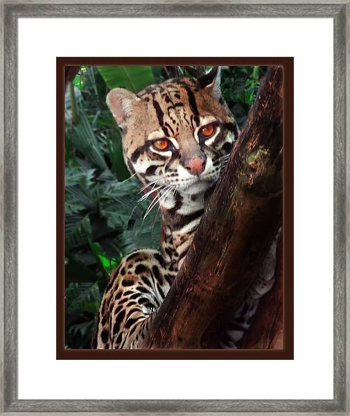Ocelot Lookout Framed Print