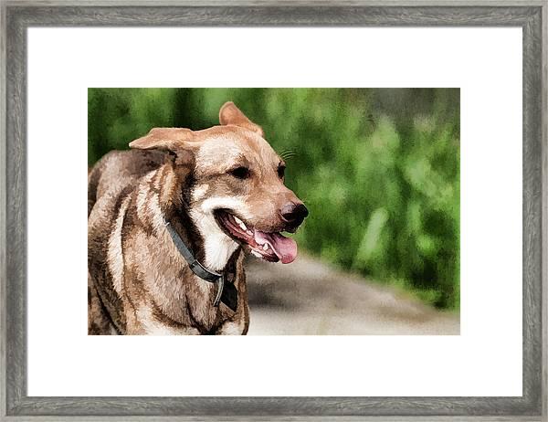 Oily Dog Framed Print