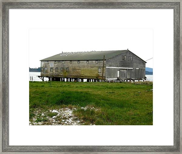 Old Cannery Oysterville Framed Print