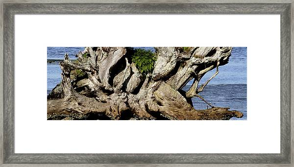 Old Tree  Framed Print by Mary Gaines