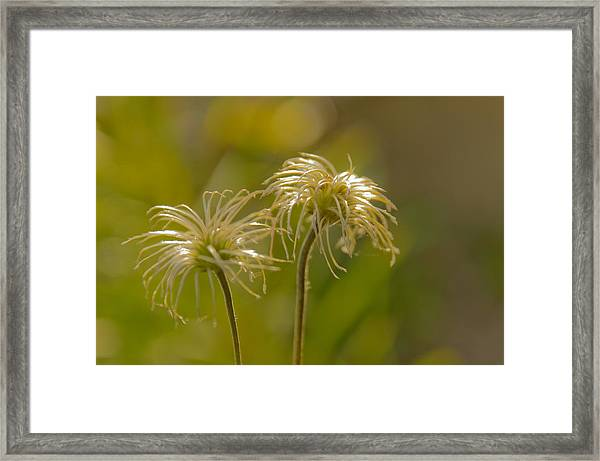 Oldness Framed Print