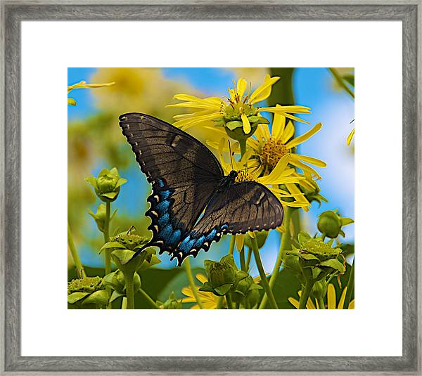 On A Summer's Day Framed Print