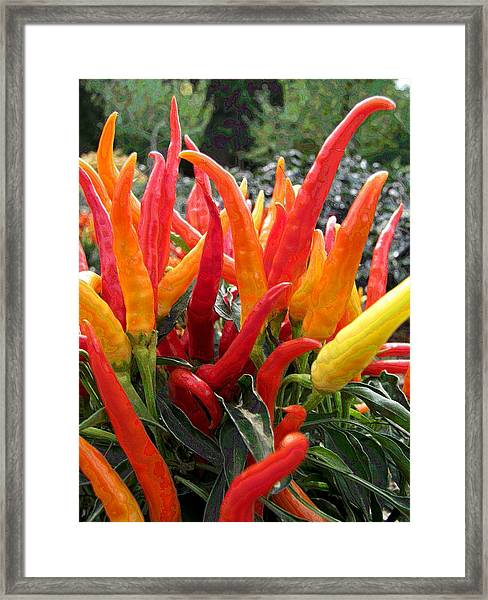 Only The Brave II Framed Print