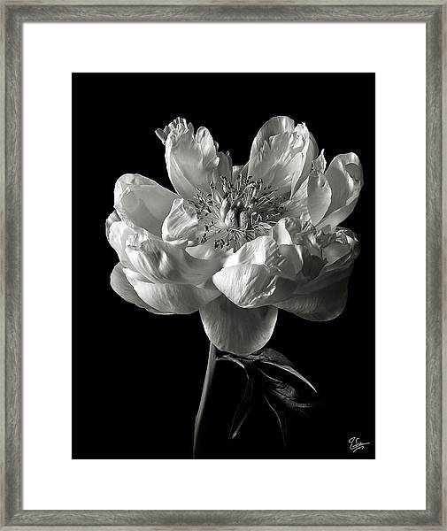 Open Peony In Black And White Framed Print
