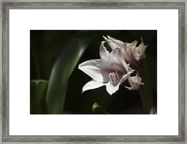 Open To The Light Framed Print