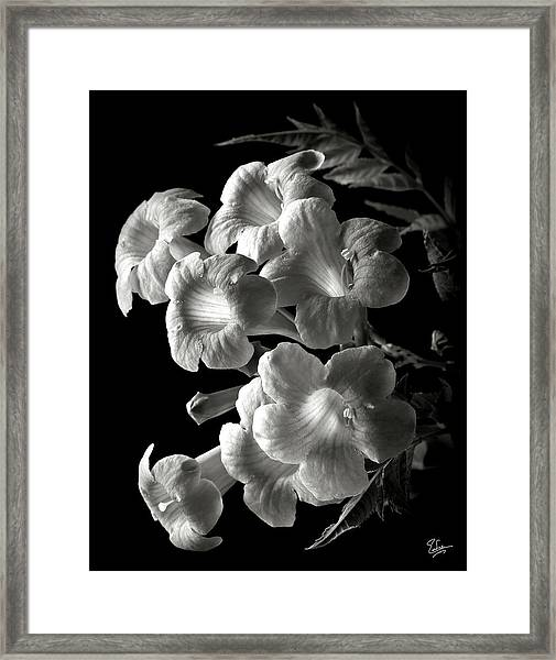 Orange Jubilee In Black And White Framed Print