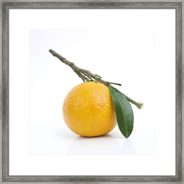 Orange Satsuma Framed Print