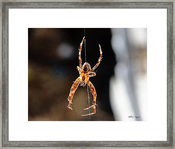 Orange Spider Framed Print