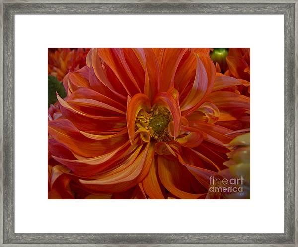 Orange You Happy Framed Print
