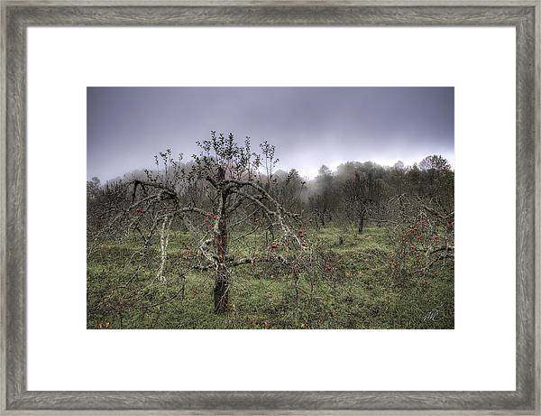 Orchard At Altapass Framed Print by Williams-Cairns Photography LLC