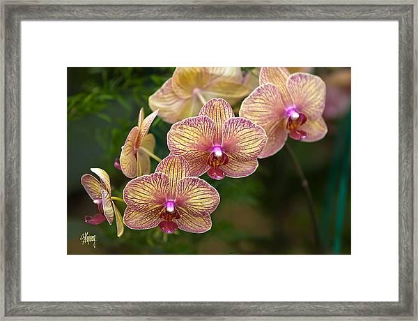 Orchid 1 Framed Print