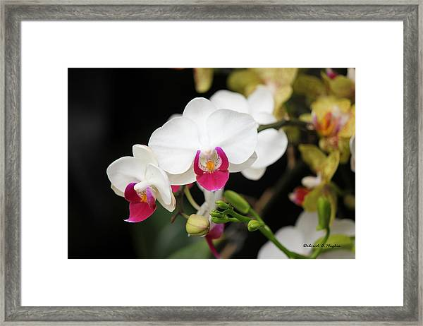 Orchid Buds Framed Print