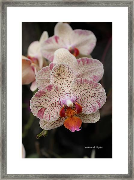 Orchid Perspective Framed Print