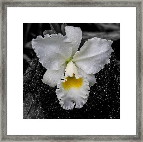 Orchid Shower Framed Print