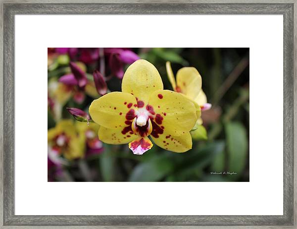 Orchid Tie Dye Framed Print