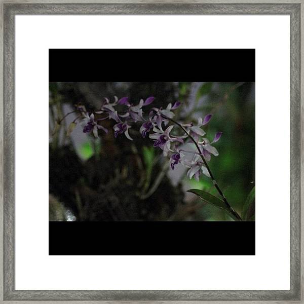 Orchids Of Beauty And Mystery, By My Framed Print