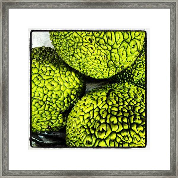 Osage Orange Framed Print