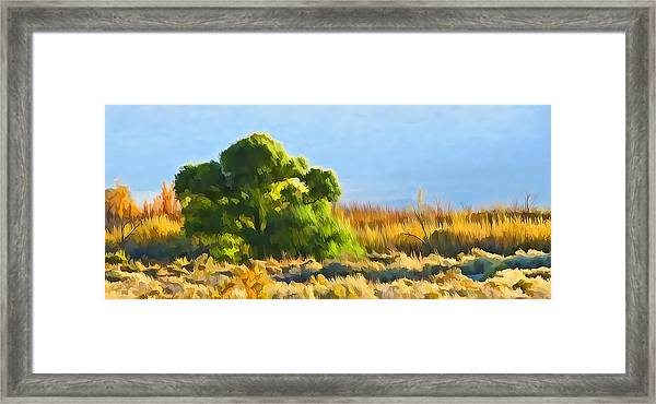 Owens Valley Tree And Brush Framed Print