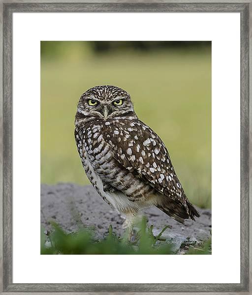 Owl Stare Framed Print