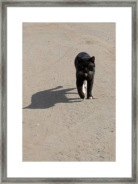 Owner Framed Print