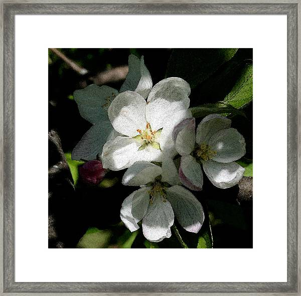 Painted Blossoms Framed Print