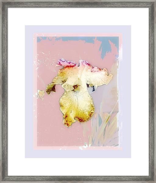Painted Iris Framed Print