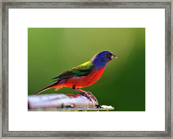 Painting Color Framed Print