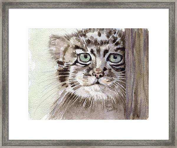Pallas Cat Framed Print