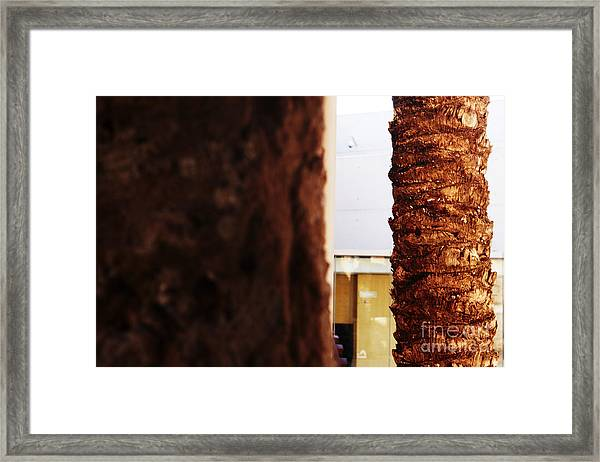 Palm And Wall Framed Print
