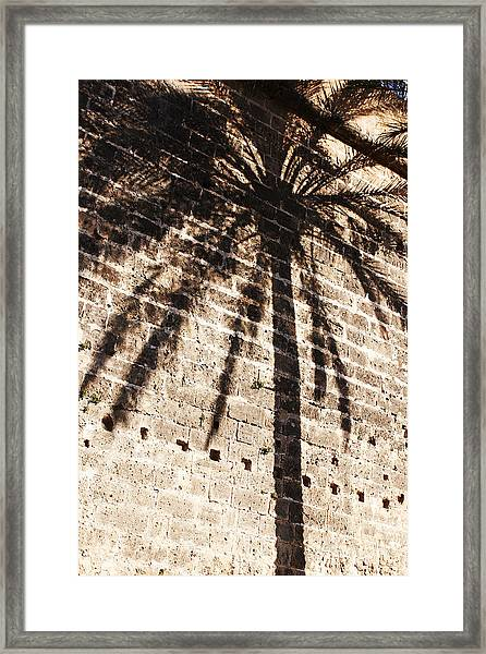 Palm Shadow Framed Print